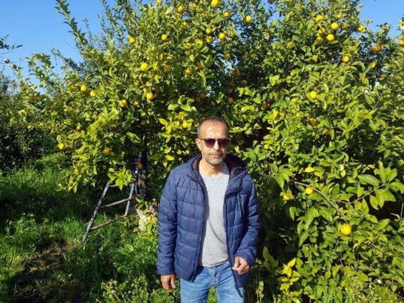 Dalaman'daki portakal ve limon üreticisi destek bekliyor