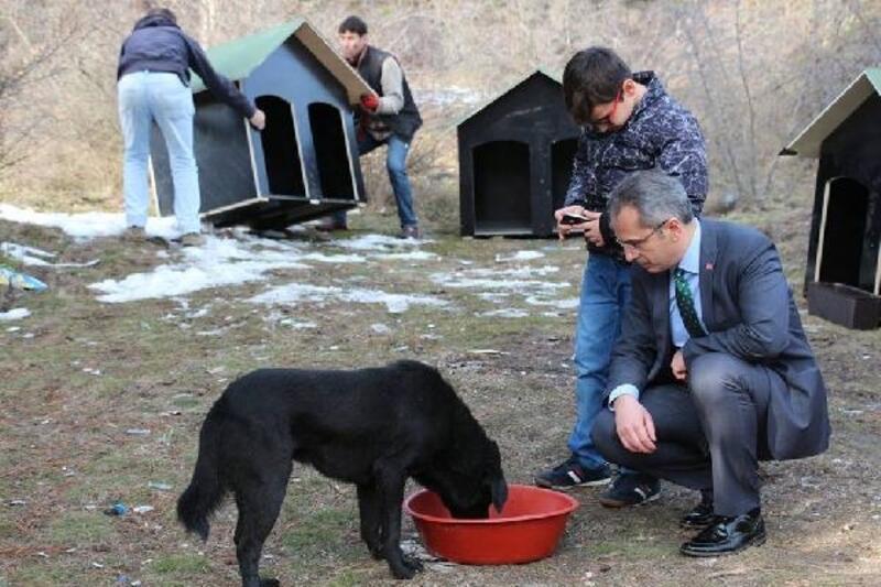 Tosya'da sokak hayvanları için kulübe