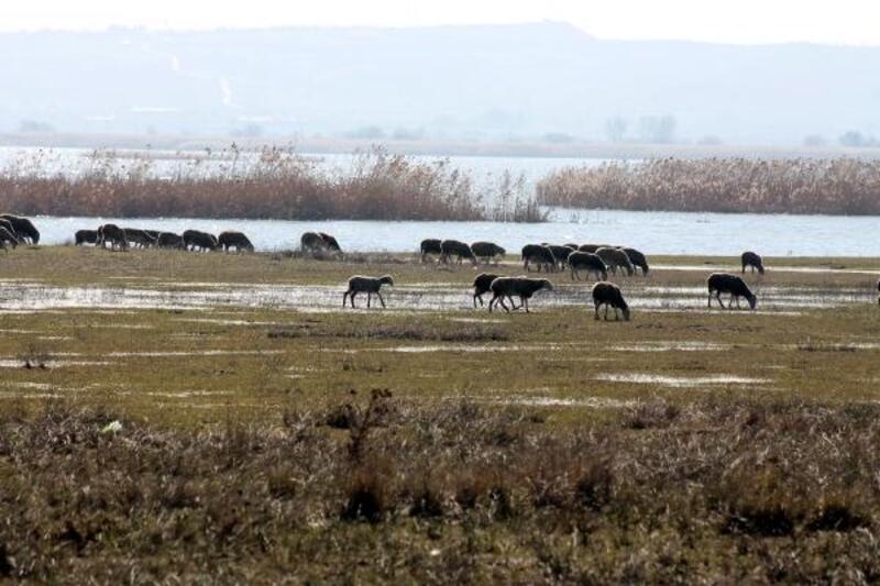 Manyas Gölü'nde su seviyesi yükseldi