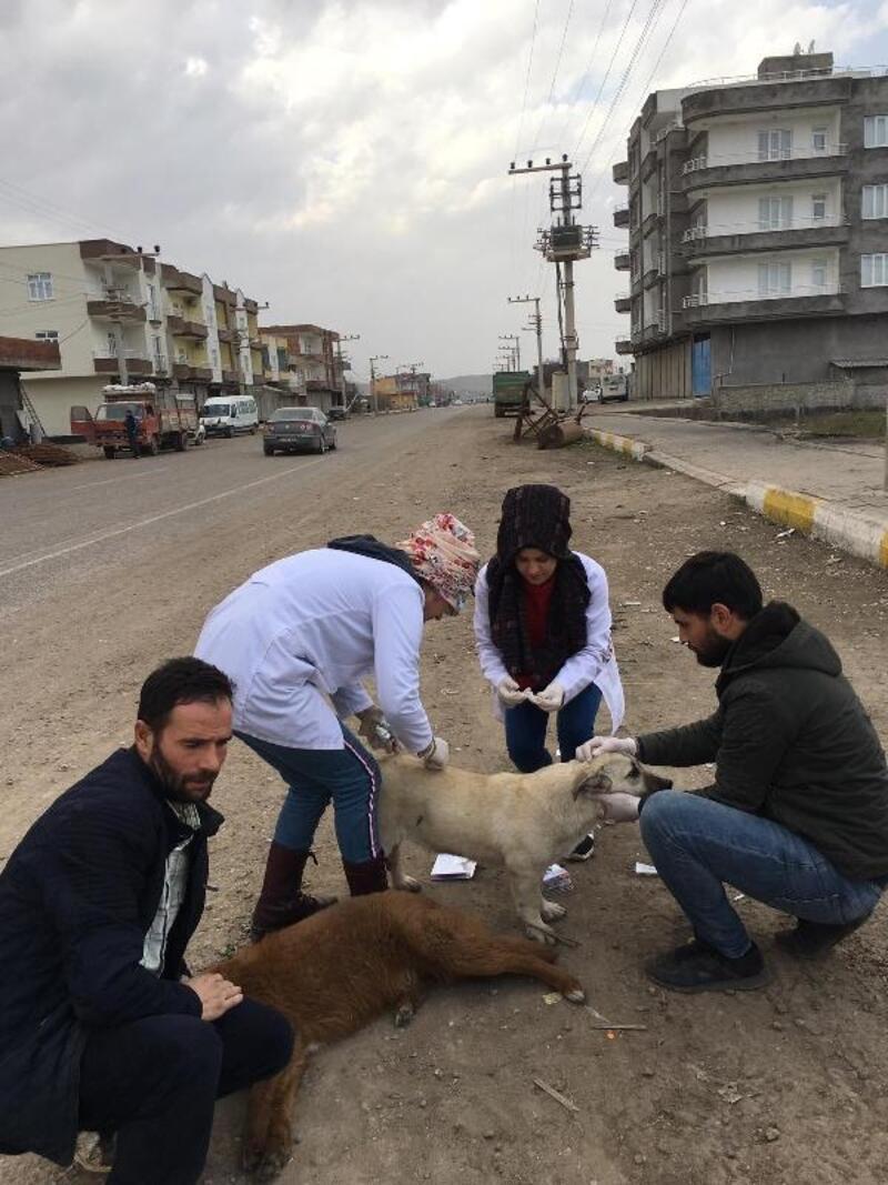 Sokak köpekleri Şefkat Merkezi'ne yerleştirildi
