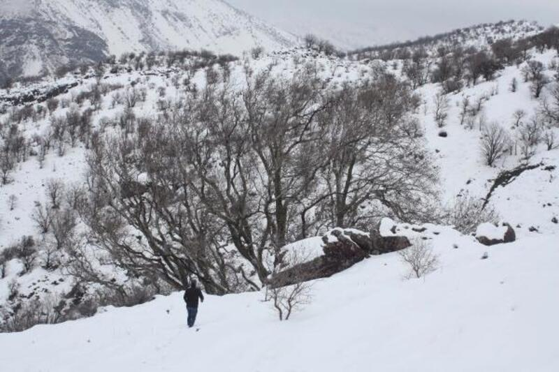 Çelikhan'da 600 yıllık çınar ağacına büyük ilgi