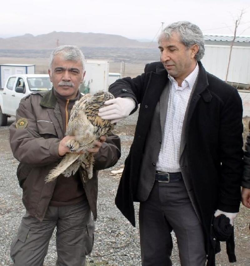 Puhu kuşu, rektörlük konutunun bacasına sığındı
