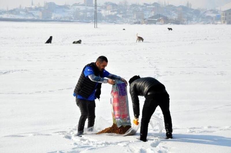 Yüksekova'da sokak ve yaban hayvanları unutulmadı