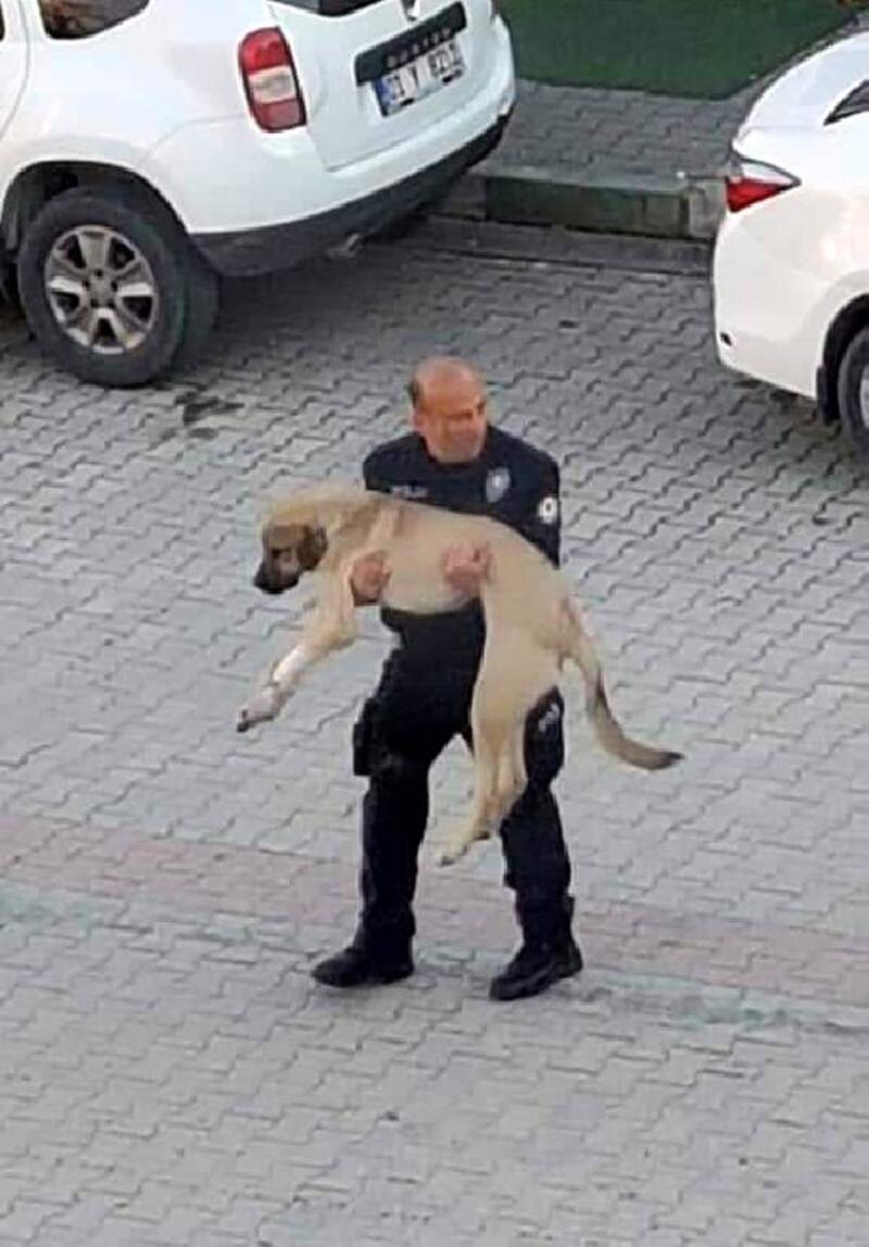 Polis memuru, yaralı köpeği kucağında veterinere götürdü
