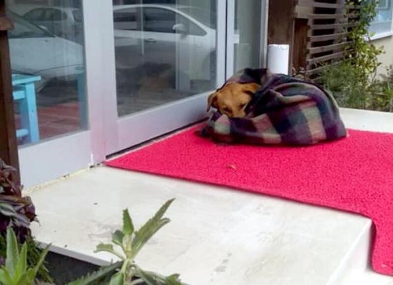 Sokak köpeğini battaniyeye sarıp ısıttılar