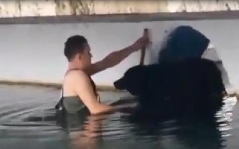 Havuzda mahsur kalan köpeği belediye işçisi kurtardı