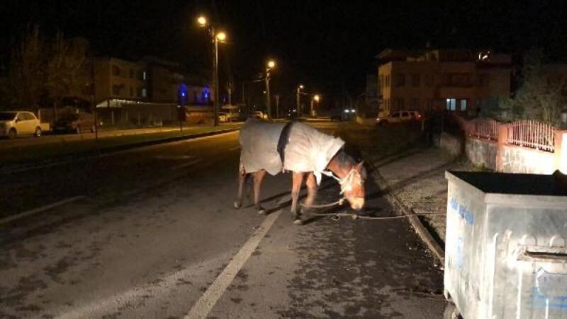 Bursa'da soğuk hava nedeniyle 'atı' 'naylona' sardılar