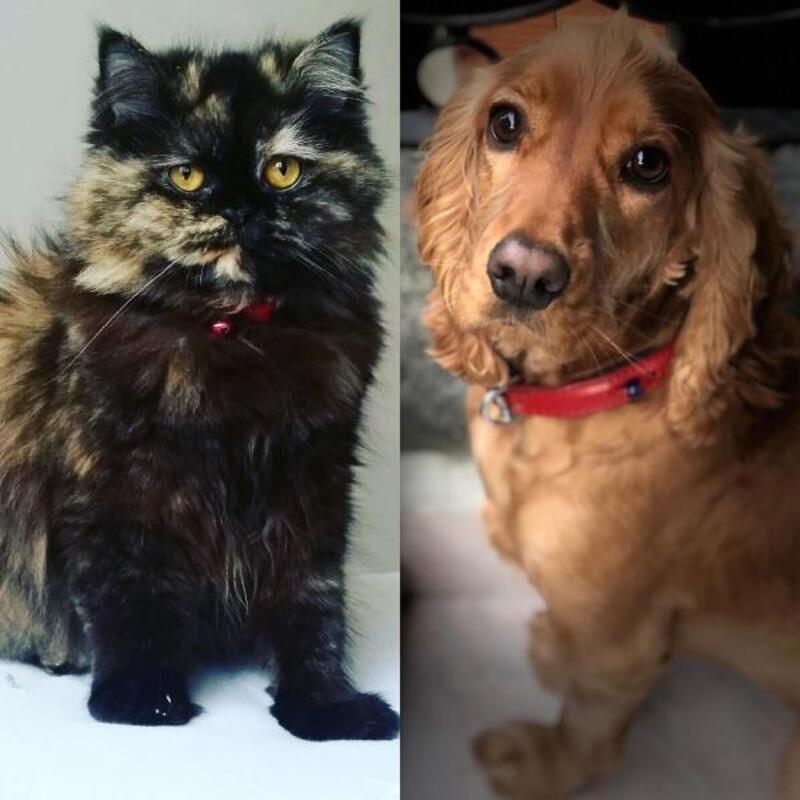 Birleşik Krallık'ta kedi ve köpek satışı yasaklanıyor