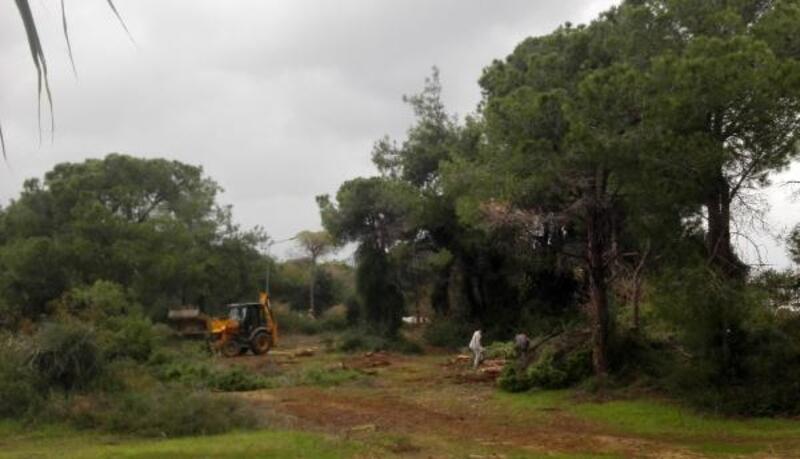 Sorgun Ormanı'nda turizm tesisi için ağaç kesimi