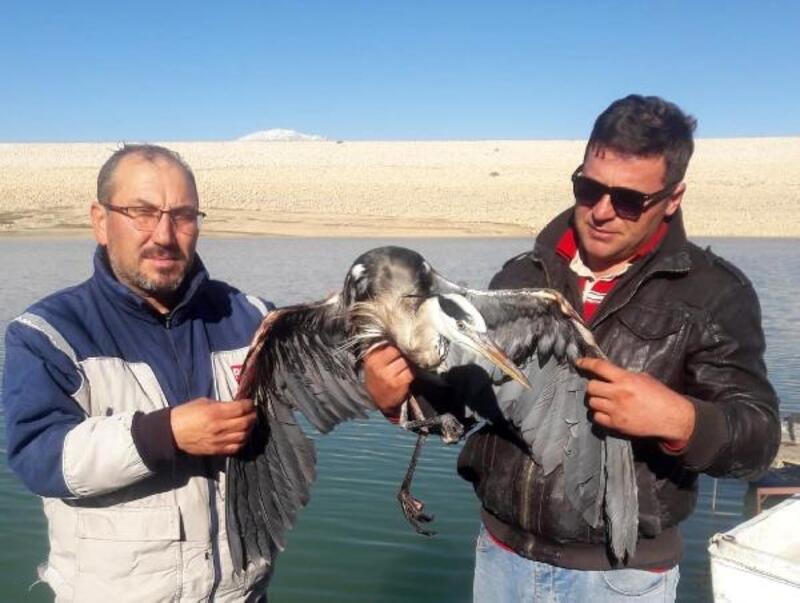 Ağlara takılan balıkçıl kurtarıldı