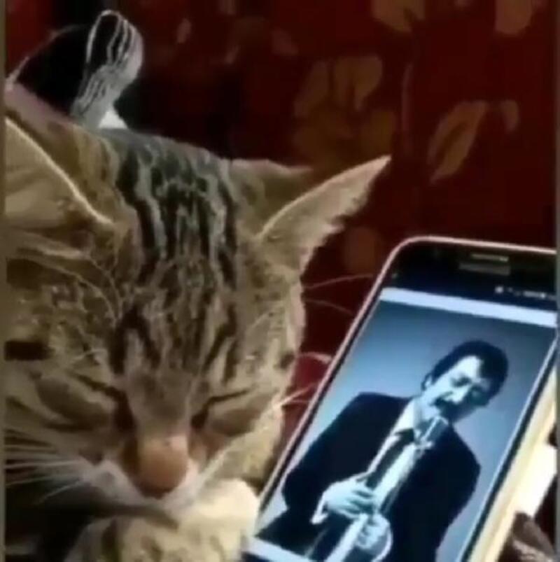 Müslüm Gürses şarkısı çalarken kedinin tepkisini görüntülediler