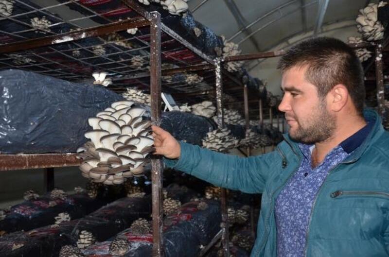 Bakanlık desteğiyle mantar üretim tesisi kurdu