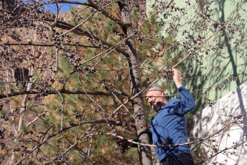 Erzurum'da kış, ilçesi Olur'da bahar havası
