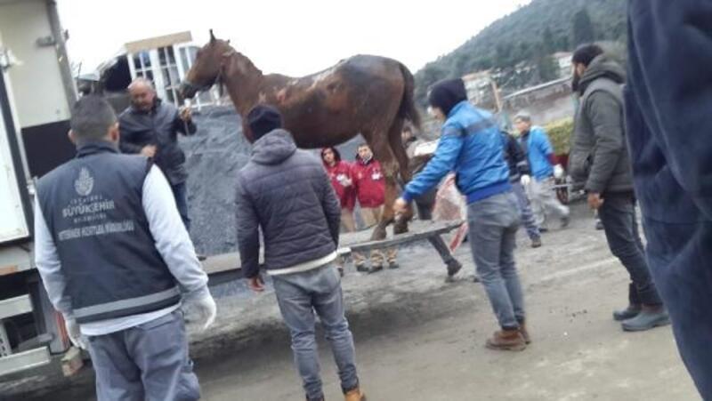 Büyükada'daki yangında yaralanan atlar tedavi için bakımevine götürüldü