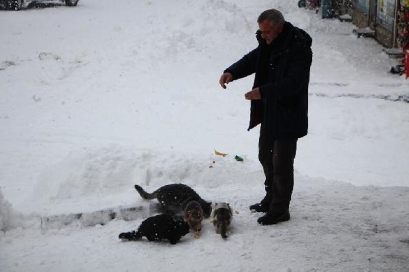 Karlıova'da aç kalan kedileri kekle besledi