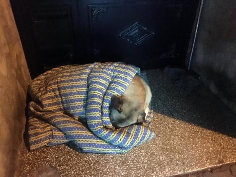 Taksiciler, sokak köpeğini battaniye ile ısıttı