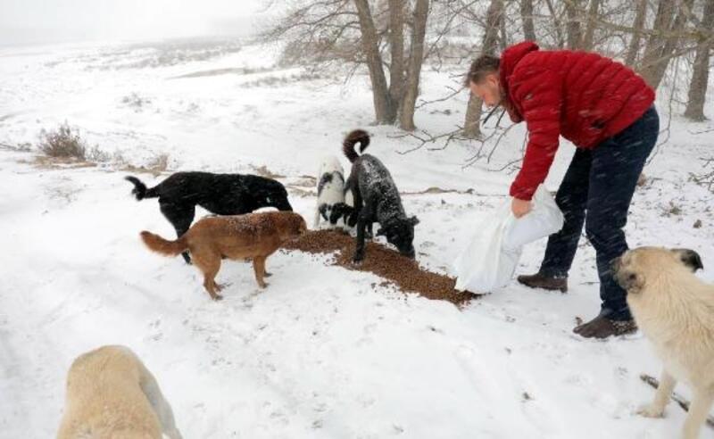 Edirne'de sokak hayvanları unutulmadı
