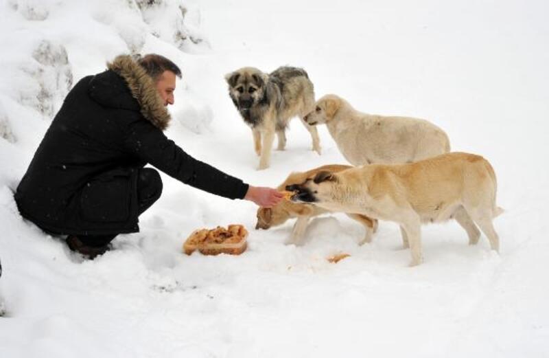 Yaylada aç kalan köpekleri besliyorlar