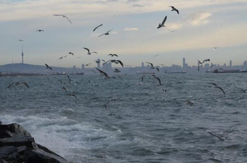 İstanbul'da lodosta martıların dalgalarla dansı