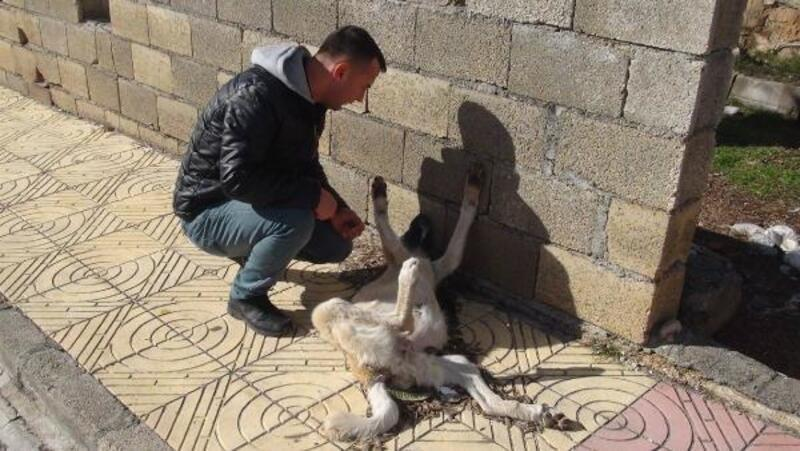 Besni'de sokak köpeği donarak telef oldu