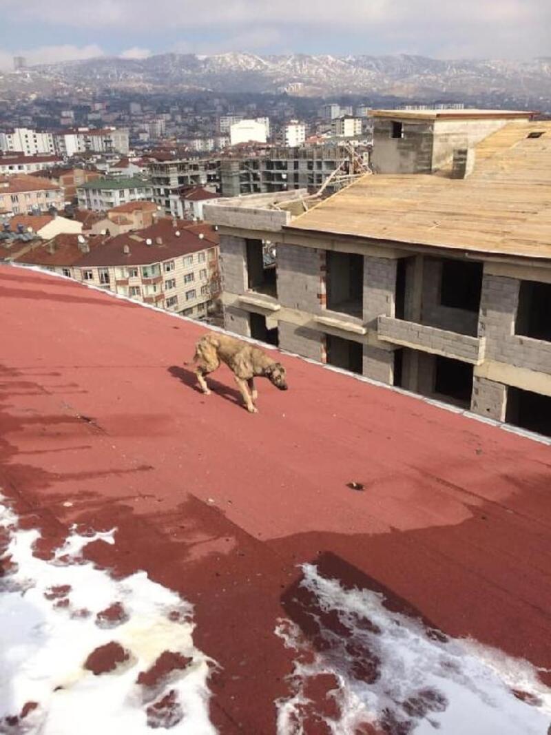 Çatıda mahsur kalan sokak köpeği kurtarıldı