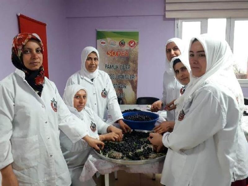 Altınözü'nde salamura zeytin üretimi başladı