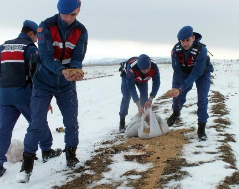 Yozgat'ta jandarma ekipleri, doğaya yiyecek bıraktı