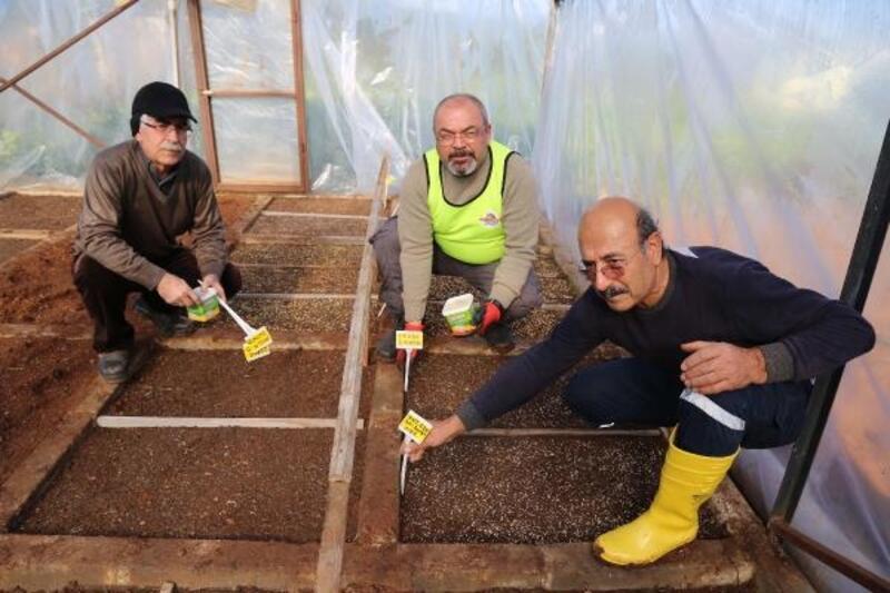 Mezitli'de tohum ekimi başladı