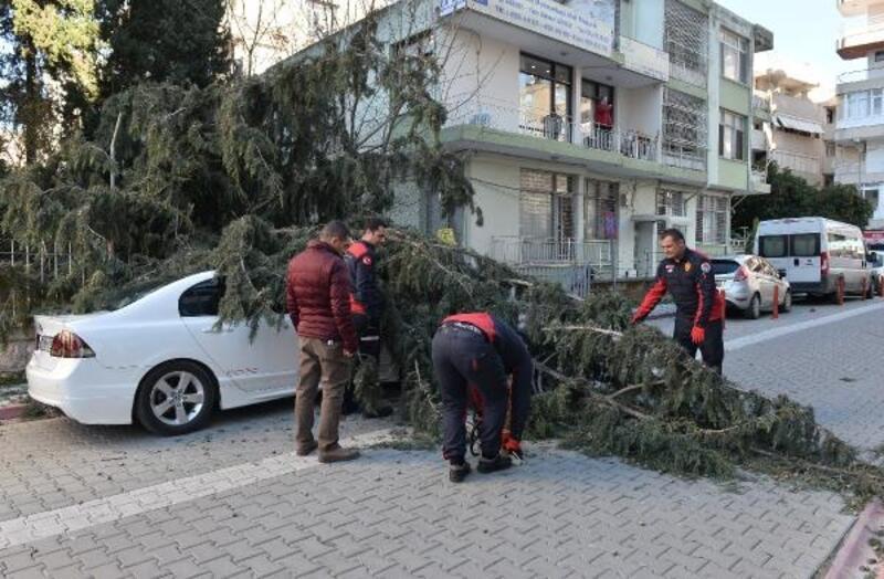 30 metrelik ağaç, çocuk parkının üzerine devrildi