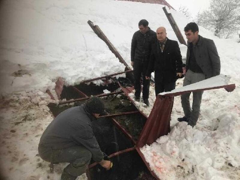 Kar nedeniyle çöken ahırdaki inek telef oldu