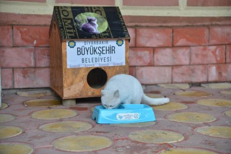 Dyarbakır'da belediyeden sokaklara 'Kedi Evi'