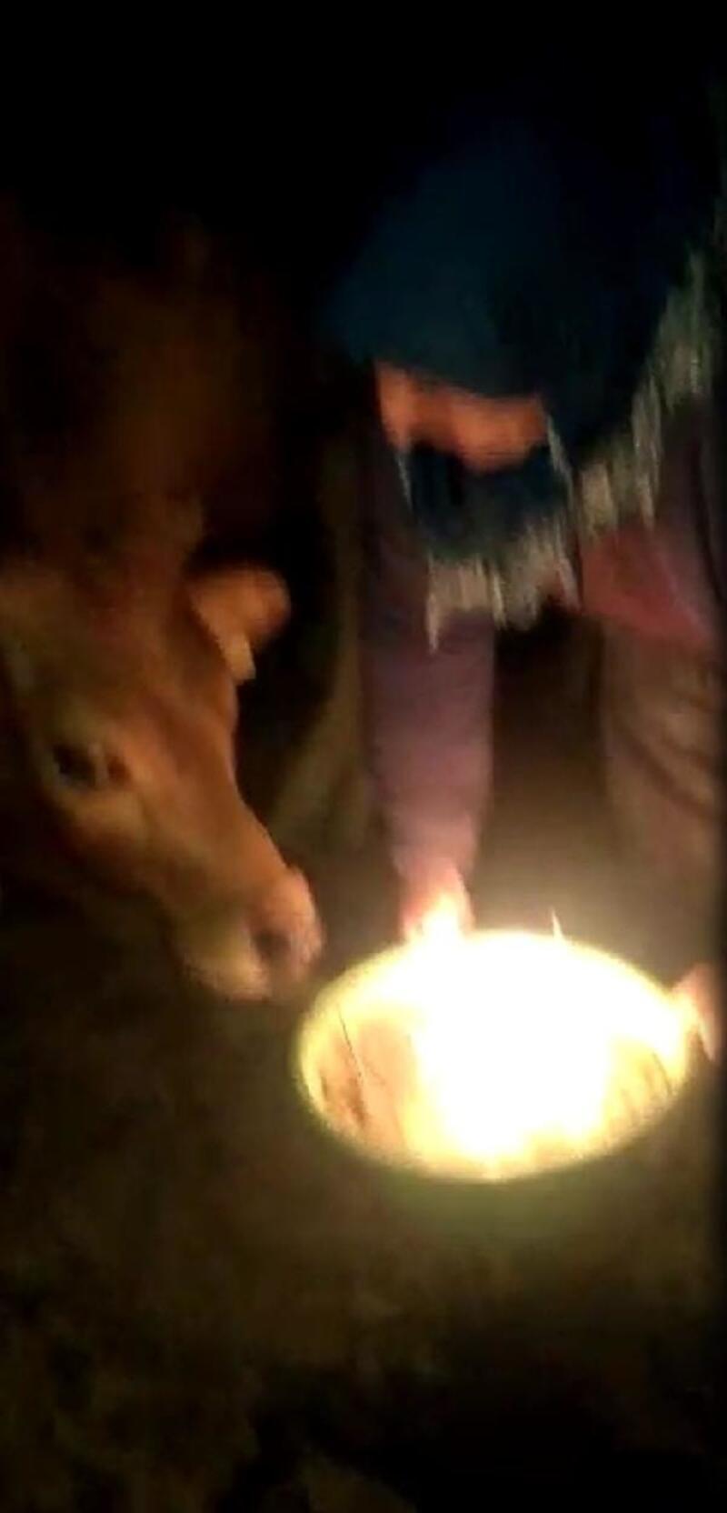 Düvesi 'Ayşegül'ün doğum gününü kutladı