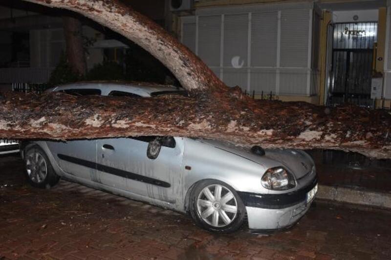 İzmir'de çam ağacı otomobilin üzerine devrildi