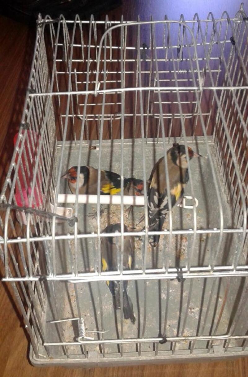 Kaçak kuş satıcısına 9 bin lira ceza