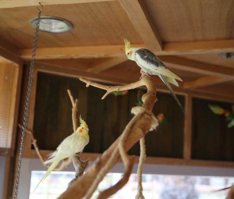 Papağanlar belediye korumasında