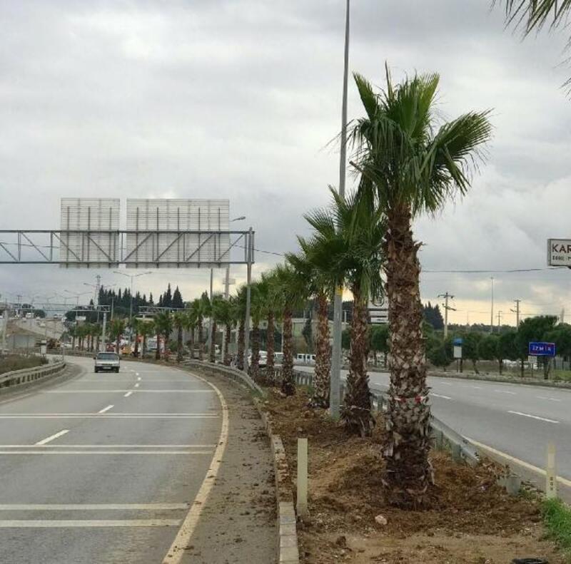 Menderes'i palmiyeler süsleyecek
