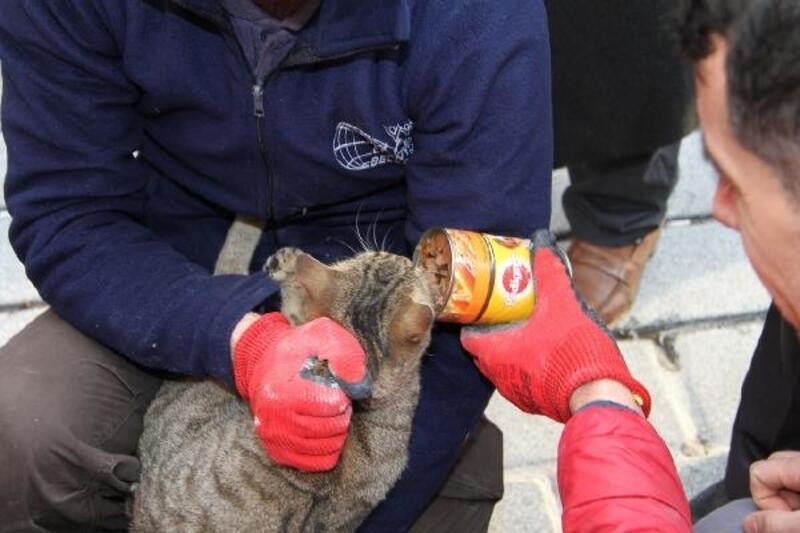 Esenyurt'ta mahsur kedi operasyonu