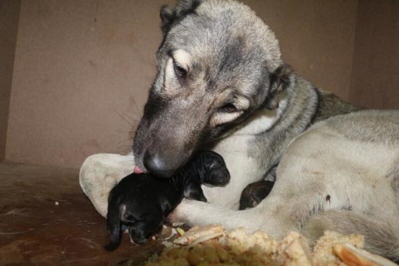 Donma tehlikesi geçiren köpek ve yavrularını itfaiye kurtardı