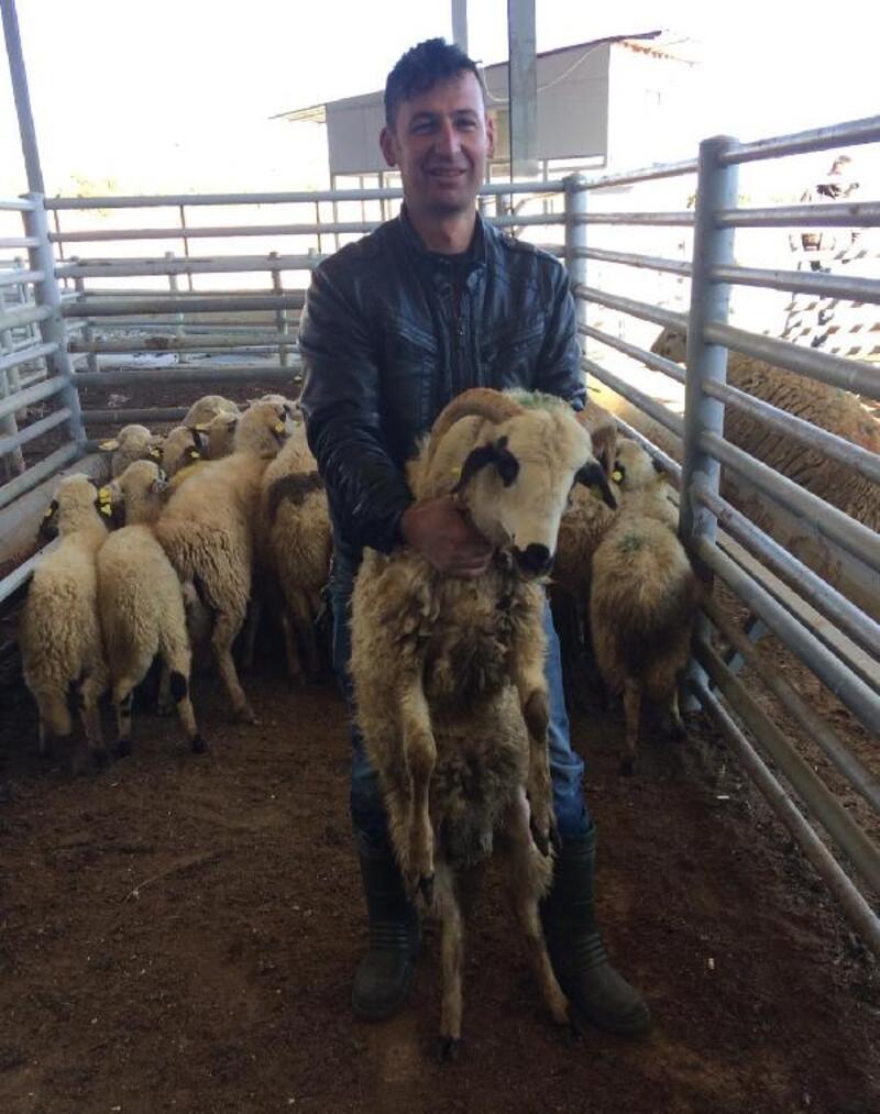 4 genç çiftçiye hayvan desteği