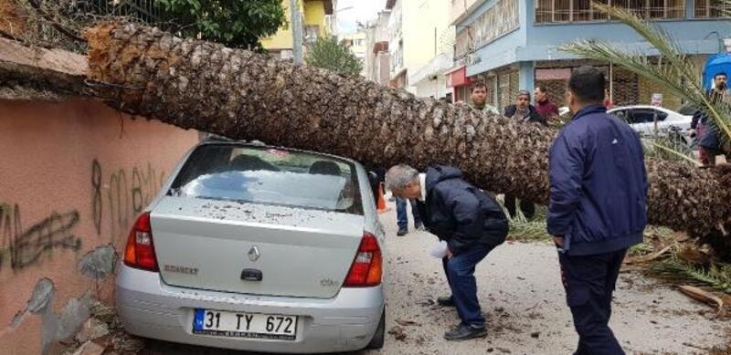 Fırtınanın devirdiği hurma ağacı 2 araca zarar verdi