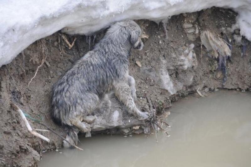 Derede mahsur kalan köpeği itfaiye ekipleri kurtardı