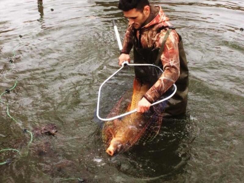 Boşaltılan havuzdaki balıklar göle bırakıldı