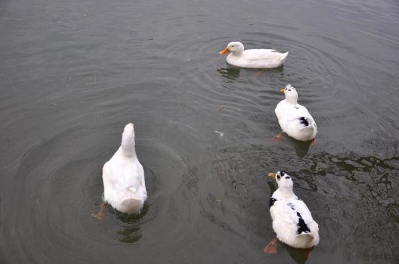 Avcılar, Sapanca Gölü'ndeki av yasağının kaldırılmasını istiyor