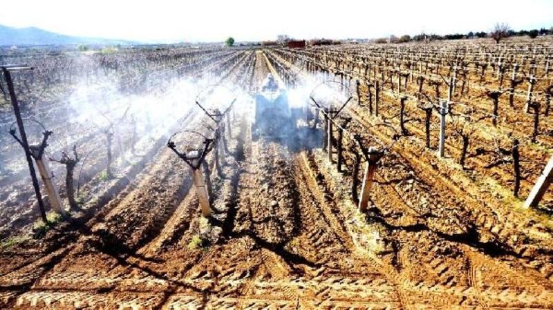 Sarıgöl'de üzüm bağlarında hummalı çalışma