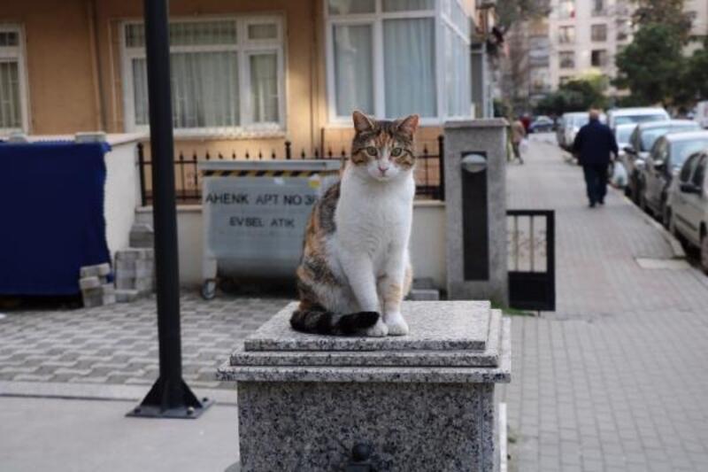 Kadıköy'de kediye saldıran kişi ile kavga eden gencin annesi