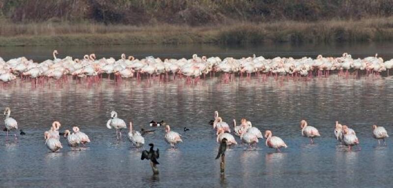 Göçmen kuşlar, Hersek Lagünü'ne gelmeye başladı