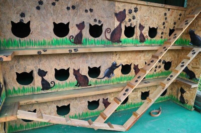 """Başakşehir'in kedileri """"ev""""leniyor"""