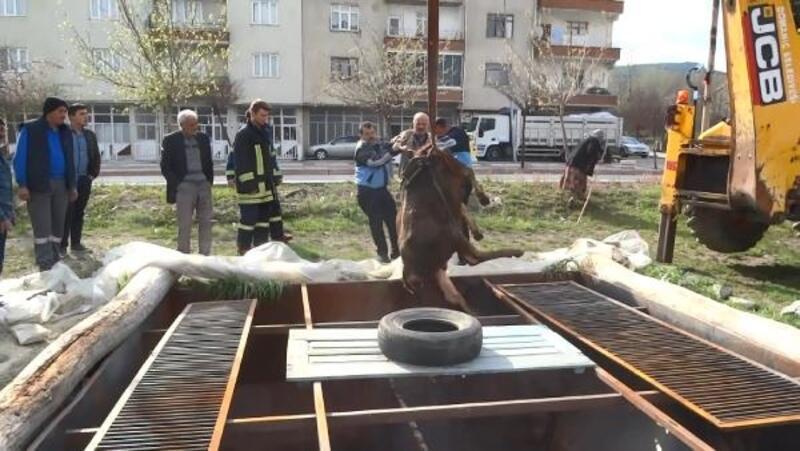 Siloya düşen inek, kepçeyle kurtarıldı