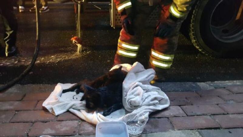Bağcılar'da yangın: 5 kediden 3'ü kurtarıldı