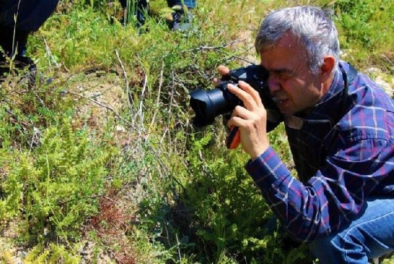 Amasya'da 'yitik lale'ler yeniden filizleniyor